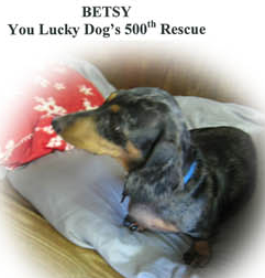 You Lucky Dog's 500th Adoption!